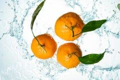 Апельсины мочат выплеск стоковое фото rf