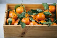 Апельсины Tangerines, Клементины, цитрусовые фрукты с зелеными листьями в деревянной коробке над светлой предпосылкой с космосом  Стоковое Фото