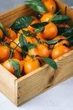 Апельсины Tangerines, Клементины, цитрусовые фрукты с зелеными листьями в деревянной коробке над светлой предпосылкой с космосом  Стоковые Фотографии RF