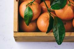 Апельсины Tangerines, Клементины, цитрусовые фрукты с зелеными листьями в деревянной коробке над светлой предпосылкой с космосом  Стоковое Изображение RF