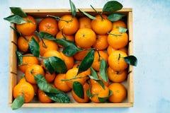 Апельсины Tangerines, Клементины, цитрусовые фрукты с зелеными листьями в деревянной коробке над светлой предпосылкой с космосом  Стоковое Изображение