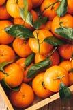 Апельсины Tangerines, Клементины, цитрусовые фрукты с зелеными листьями в деревянной коробке над светлой деревянной предпосылкой  Стоковые Фото