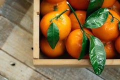 Апельсины Tangerines, Клементины, цитрусовые фрукты с зелеными листьями в деревянной коробке над светлой деревянной предпосылкой  Стоковые Изображения RF