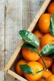 Апельсины Tangerines, Клементины, цитрусовые фрукты с зелеными листьями в деревянной коробке над светлой деревянной предпосылкой  Стоковая Фотография