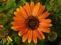 Апельсин и зеленый цвет Стоковые Фото