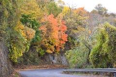 Апельсин и улица дерева осени Стоковое фото RF