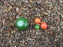 Апельсины в миниатюре Стоковая Фотография