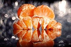 Апельсины и гвоздичные деревья мандарина Стоковая Фотография
