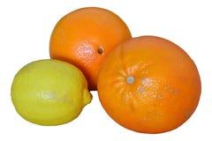 Апельсины и лимон Стоковое Изображение