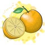Апельсины стиля чернил и акварели Стоковое фото RF