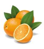 Апельсины иллюстрация вектора
