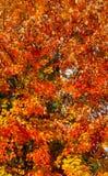 Апельсин, желтый цвет, красный цвет, персик среди зеленого цвета Стоковая Фотография
