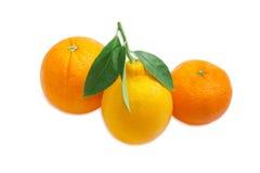 Апельсин, лимон и апельсин мандарина на светлой предпосылке Стоковые Изображения RF