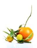 Апельсин и лимон Стоковая Фотография