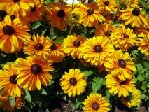 Апельсин к покрашенным персиком цветкам предпосылки Стоковое Изображение