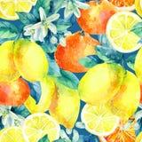Апельсин мандарина акварели и плодоовощ лимона разветвляют с картиной листьев безшовной Стоковая Фотография