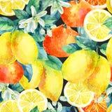 Апельсин мандарина акварели и плодоовощ лимона разветвляют с картиной листьев безшовной Стоковые Изображения