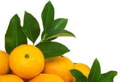Апельсин мандарина. Стоковая Фотография