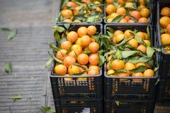 Апельсин на рынке стоковое изображение rf