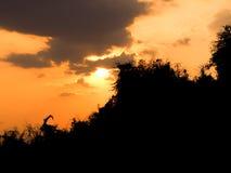 Апельсин неба захода солнца красивый Таиланд Стоковая Фотография RF
