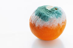 Апельсин покрытый с прессформой Стоковые Фото