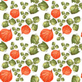 Апельсин цветет физалис и зеленый цвет выходит на белую предпосылку Безшовная картина акварели бесплатная иллюстрация