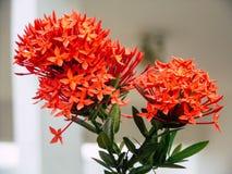Апельсин цветка в фокусе Стоковое Изображение