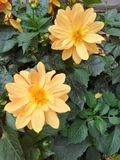 Апельсин bogota улицы сада Стоковые Изображения RF