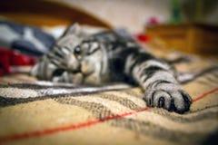 лапка s кота Стоковое Изображение RF