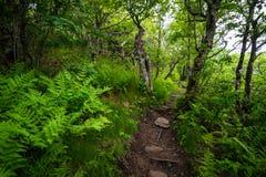 аппалачская тропка Стоковая Фотография RF
