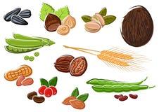 Аппетитные гайки, фасоли, семена и пшеница Стоковые Изображения RF