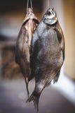 2 аппетитных высушенных рыбы весят на запачканной предпосылке Стоковые Изображения RF