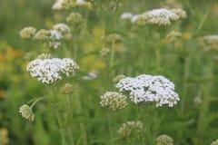 апрель приносит цветки может ливни стоковые изображения