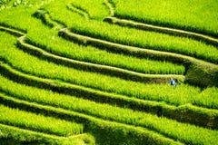 Арабеска поля риса Стоковое Фото
