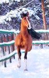 арабская предпосылка за зимой лошади moving Стоковое фото RF