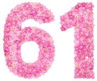Арабский цифр 61, 60 одних, от розовой незабудки цветет, I Стоковая Фотография RF