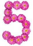 Арабский цифр 5, 5, от изолированных цветков хризантемы, Стоковое Фото