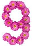 Арабский цифр 9, 9, от изолированных цветков хризантемы, Стоковые Фотографии RF
