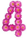 Арабский цифр 4, 4, от изолированных цветков хризантемы, Стоковое фото RF