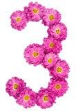Арабский цифр 3, 3, от изолированных цветков хризантемы, Стоковое Фото