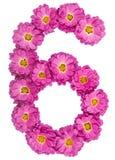 Арабский цифр 6, 6, от цветков хризантемы, изолировал o Стоковое Изображение