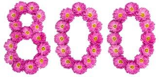 Арабский цифр 800, 800, от цветков хризантемы Стоковое фото RF