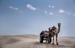 арабское соединенное сафари эмиратов пустыни Стоковое Фото
