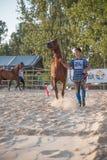 Аравийская выставка лошади Стоковые Изображения RF