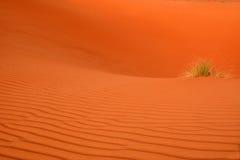 аравийская пустыня Стоковое Фото