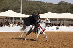 Аравийские выставка и чемпионат лошади Стоковое Изображение