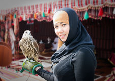 аравийский сокол Стоковая Фотография