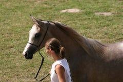 Аравийский чемпионат лошади Стоковое Фото
