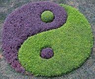 аранжированное taiji символа заводов стоковое фото rf