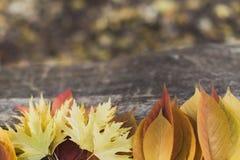 Аранжированные листья на дереве Стоковые Фото